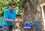 Totul Verde a început verificarea copacilor din sectorul 4 pentru prevenirea accidentelor nedorite