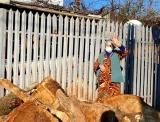 Dacă se întîmplă să cunoașteți persoane care ar putea primi acest ajutor, în sectorul 4, nu ezitați să ne contactați la numărul de telefon 021.9441.  Totul VERDE. a început distribuirea lemnelor pentru familiile nevoiașe din sectorul 4