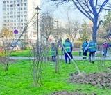 Totul VERDE a inceput  operațiunea de plantare a pomilor în sectorul 4