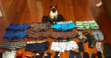 O pisica  a fura  lucrurile vecinilor