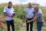 Bragadiru: Amplă acţiune  pentru stoparea răspândirii ambroziei