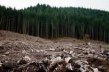 Proiect de drum forestier prin pădure . Mii de brașoveni cer oprirea defrișării