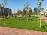 Parcul de două hectare amenajat în sectorul 6 în locul unei autobaze a societății de salubrizare