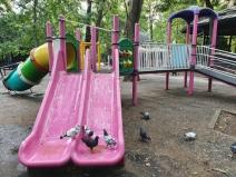 Debandada din Parcul Cișmigiu, după 2 săptămâni de la curățenie