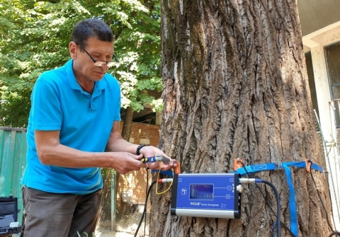 Totul Verde a început verificarea copacilor din sectoru ...